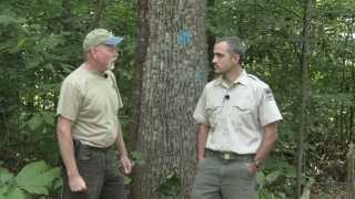 What To Expect When Preparing For A Timber Harvest | Indiana Dnr