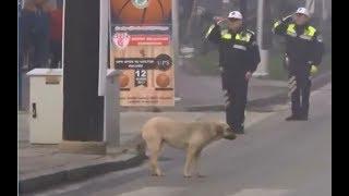 Edirne'de İstiklal Marşı Bitene Kadar Yerinden Kıpırdamayan Vefa Örneği Köpek