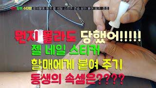 #젤네일스티커 할매 한테 연습하느라 붙여 보기^^#명자…