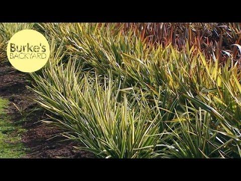 Burke 39 s backyard top low maintenance plants youtube for Best low maintenance flowers