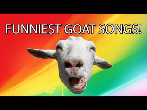 FUNNIEST GOAT SONGS!