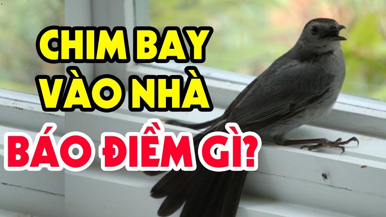 Hoảng Hồn Với  Điềm Báo Khi Chim Bay Vào Nhà? Xem Ngay Kẻo Tán Gia Bại Sản, Tiền Bạc Đội Nón Ra Đi