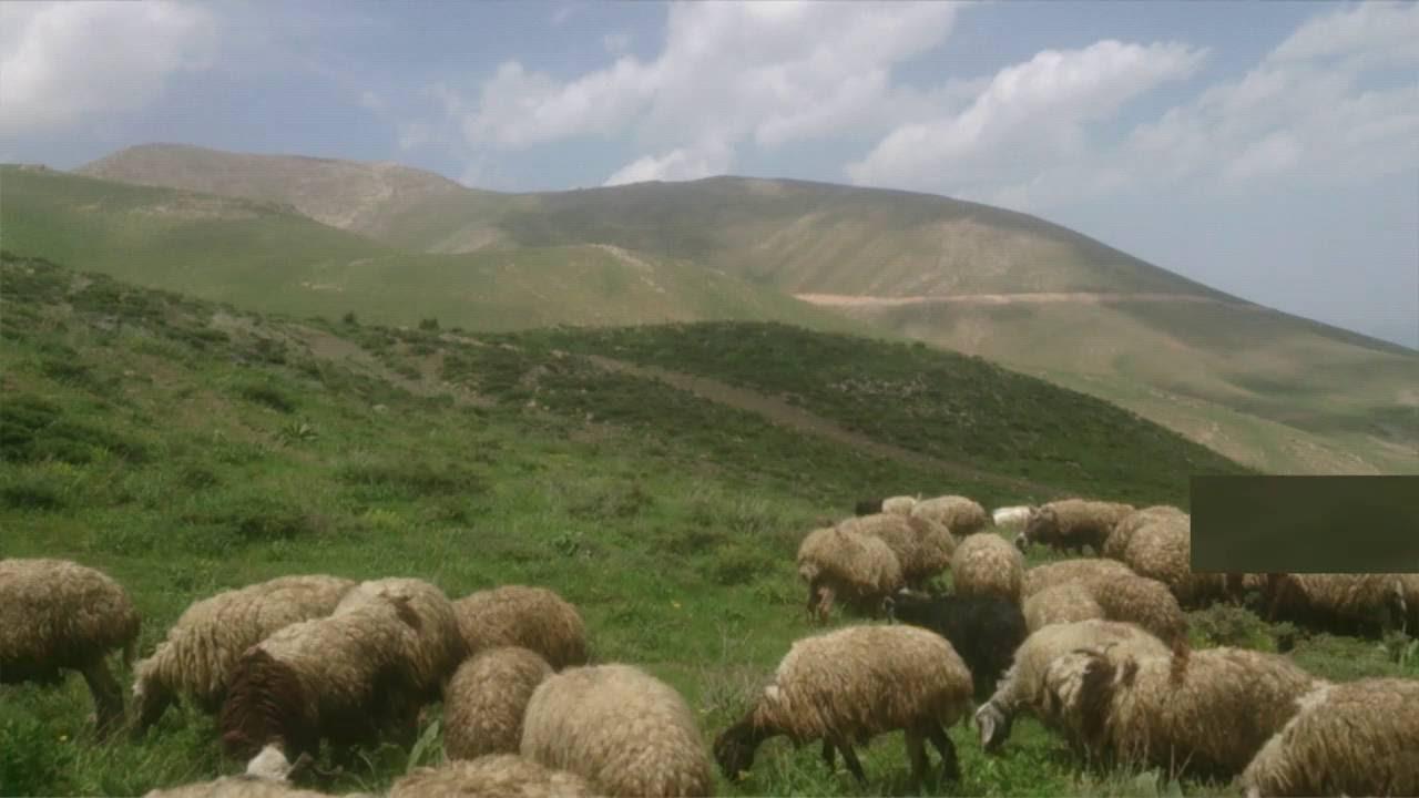 Awaze Bazidi  [XEMİLİ ZOZAN] - Kürdish Trap