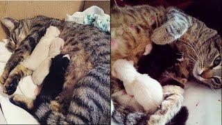La mia gatta partorisce quattro bellissimi gattini ❤