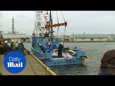 Japanese Commercial Whaling Ship Returns From Minke Whale Hunt