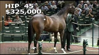 Always Dreaming as a Keeneland September Yearling