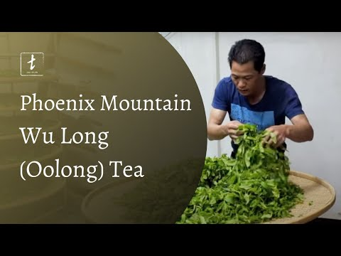 Phoenix Mountain Oolongs