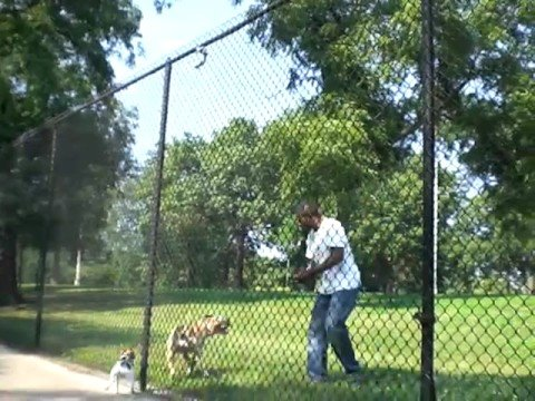 Pitbull Scales 12 Foot Fence