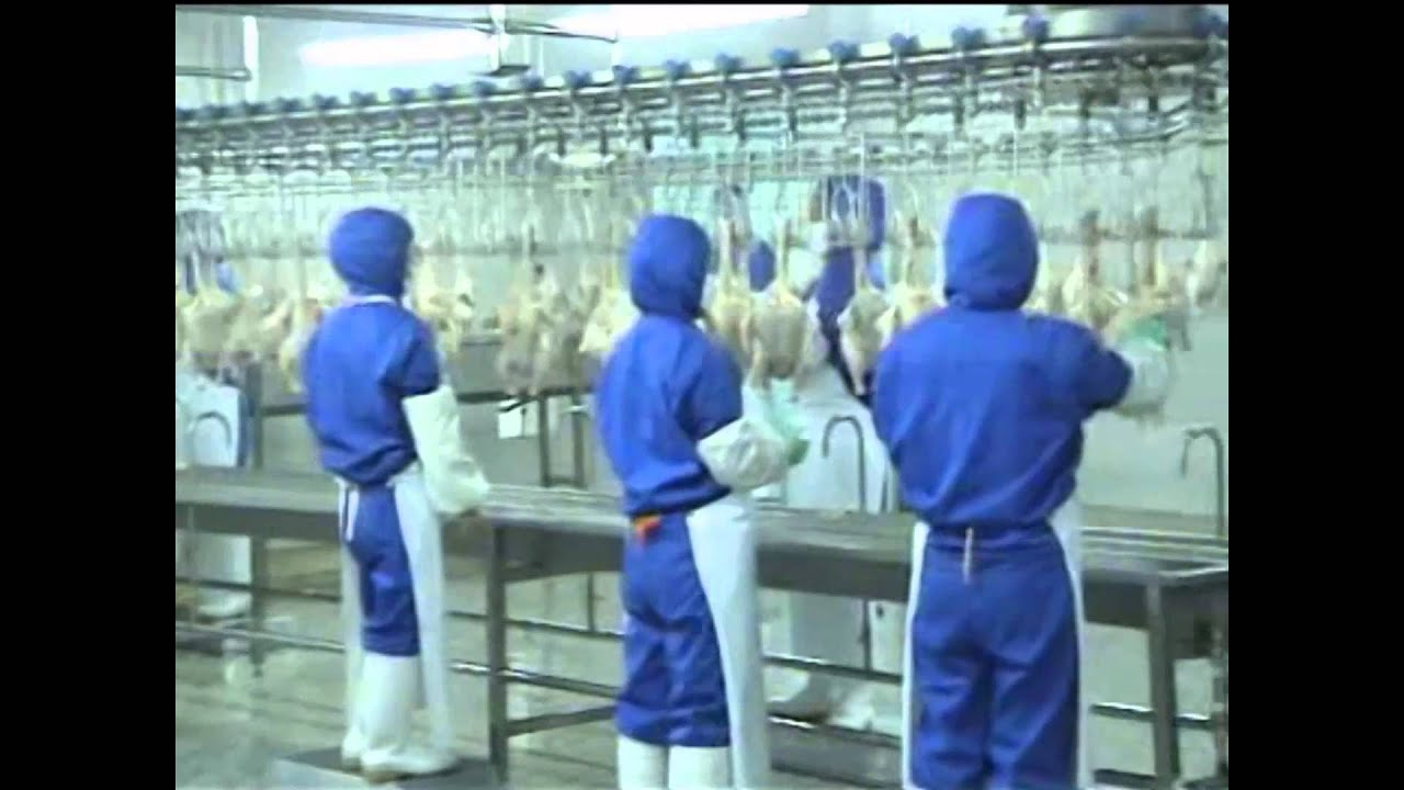 Slaughter House Video Poultry Slaughter Equipment Youtube