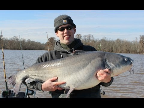 Monster Blue Catfish Trip!!! 356 Lbs Of Catfish In 8 Hrs.