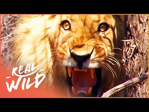 Makgadikgadi | Botswana's Wild Kingdoms | Real Wild Documentary