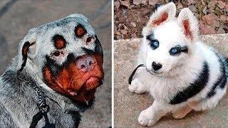 Этих собак вы никогда не встретите на улице. ТОП Самых редких и необычных пород собак на земле.