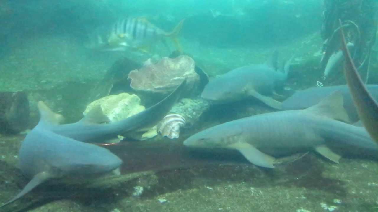 Fish aquarium edmonton - Sea Life Caverns West Edmonton Mall