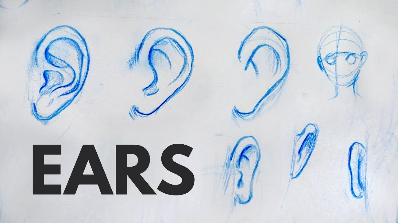How To Draw Ears Tutorial Youtube