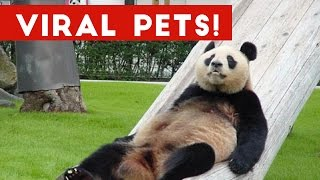 Funniest Viral Pet & Animal Videos Weekly Compilation December 2016 | Funny Pet Videos