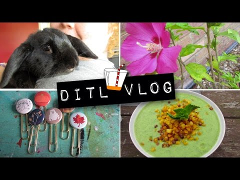 It's take tons of photos day! - VLOGUST - 23rd August 2015