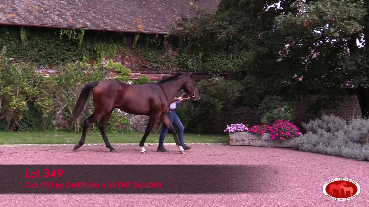 arqana octobre 2019 lot 349