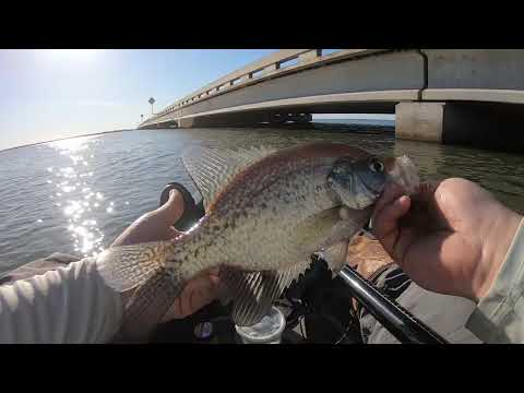 Vertical Jiggin' Texas Crappie {NET SAVES THE DAY!}