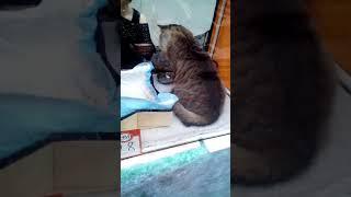 Выставка кошек в ТК АМБАР г.Самара