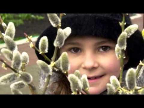 Верба - вербочка - Лучшие видео поздравления в ютубе (в высоком качестве)!
