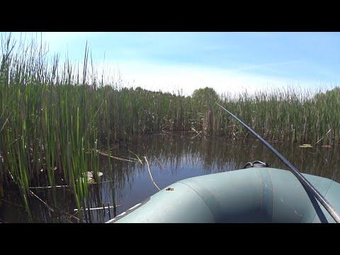 ЗАБРОСИЛ ПОПЛАВОК В КАМЫШИ .В ПОИСКАХ ЛИНЯ НА РЕКЕ.Ловля рыбы на поплавок.