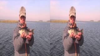 Сорокошичі. Рибалка. У пошуках хижака. 3D відео. HDR-TD10E