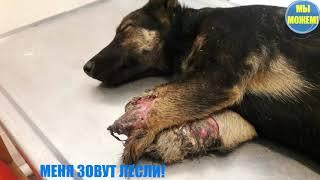 ЖЕСТОКОСТЬ ЛЮДЕЙ НЕ ИМЕЕТ ГРАНИЦ. Спасении щенка с отрублеными лапками. Челендж
