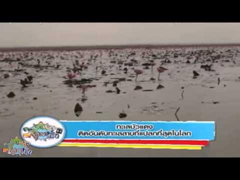 ครอบครัวข่าวเด็ก ตอน ทะเลบัวแดง ติดอันดับทะเลสาบที่แปลกที่สุดในโลก (28 ก.ค.57)