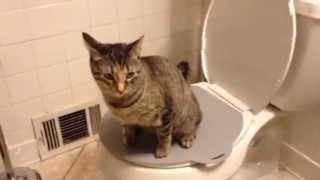 Purrfect Potty