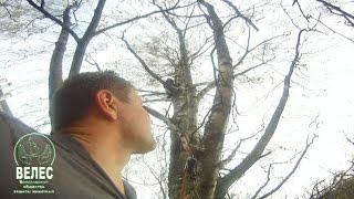 Легко ли снять кота с дерева?