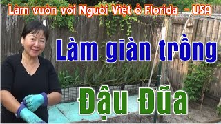 Làm giàn trồng Đậu Đũa (Làm vườn với Người Việt ở Florida - Vlog 217)