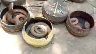 SAPUA KELA/SAPERA (Raja khae tandei,Kela khae bhandei)