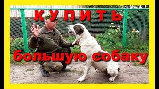Хозяин большой собаки-алабая