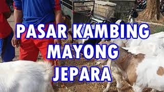 Download Video Pasar kambing MP3 3GP MP4