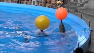 одесский дельфинарий август 2011