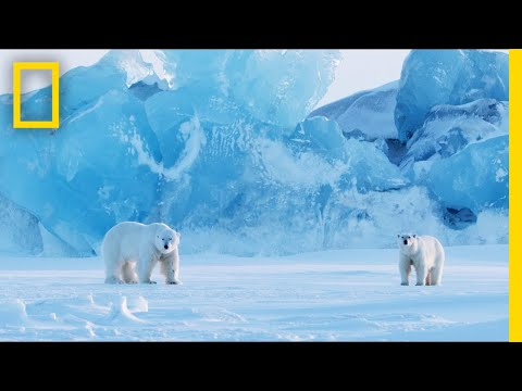 How To Photograph Polar Bears In One Of The Most Extreme Places On Earth   Short Film Showcase