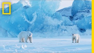 How to Photograph Polar Bears in One of the Most Extreme Places on Earth | Short Film Showcase