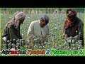 Афганский Трафик 2 (Часть 1 из 2) (720p)