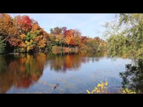 Fall Colors At Quarton Lake, Birmingham, MI
