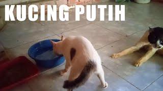 kucing putih makan nya kesusahan, tapi tetap kuat dan semangat hidup   kucing lumpuh