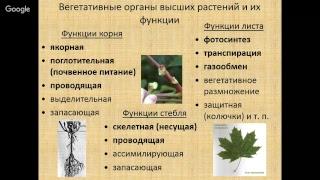 Растительные ткани и вегетативные органы высших растений