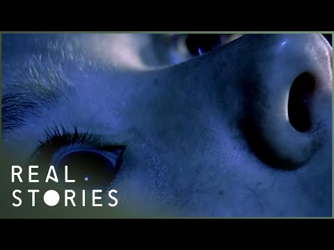 The Entity (Sleep Paralysis Documentary) - Real Stories