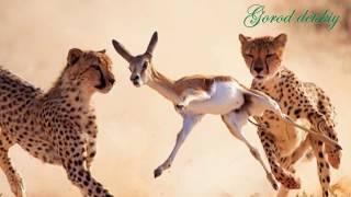 Природоведение. Животные сообщества