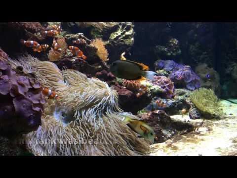 Alaska Vacation & Vancouver Aquarium Tour in under 10 minutes!
