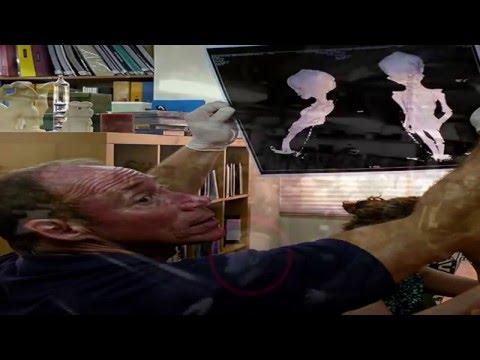 Dr  Steven Greer   Types Of Aliens