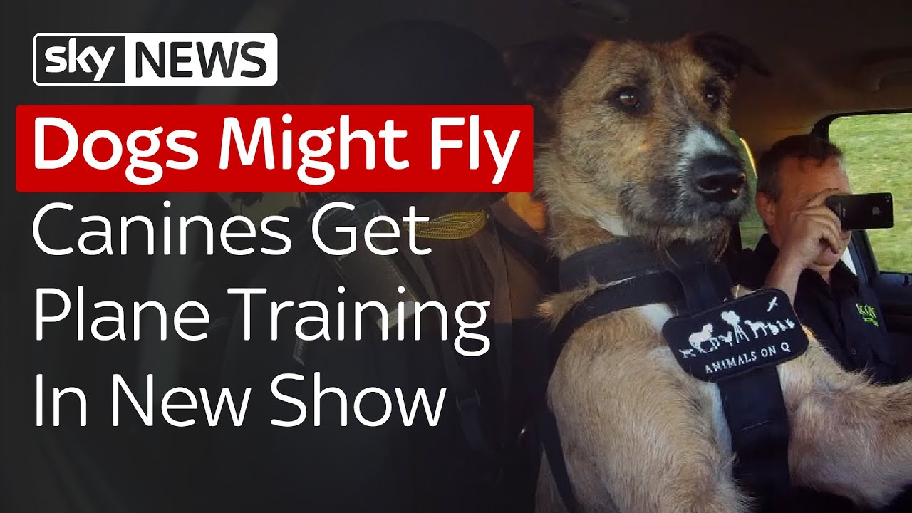 Dogs Might Fly Pooches Picked To Fly Planes In New Show Youtube