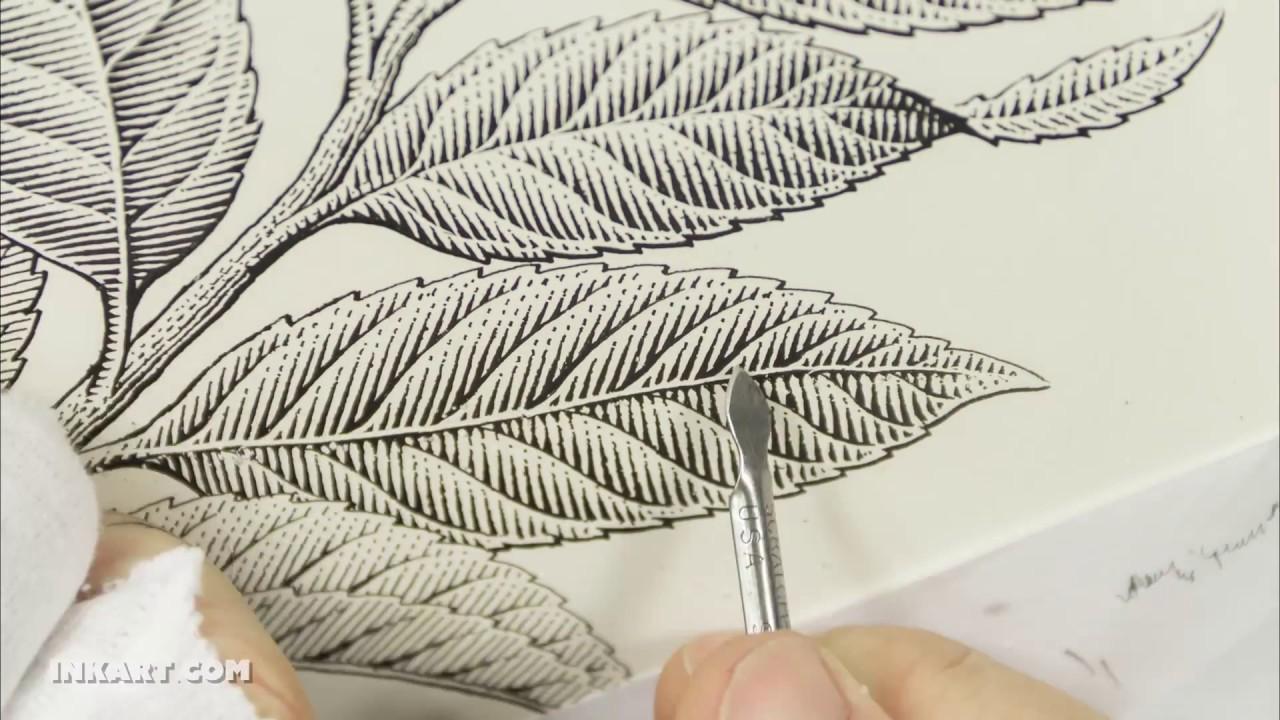 Scratchboard Illustration Of A Tea Plant