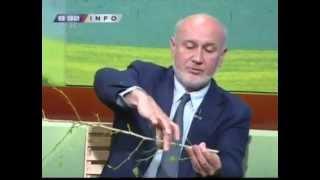 Repeat youtube video Saveti Dr Velickovica - zelena rezidba i savijanje grana neophodni