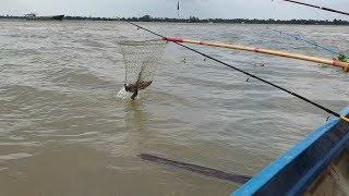 Hốt ngay vợ chồng cá bóng tượng chà bá trên cầu cảng. Ngày câu trúng mánh | Săn bắt SÓC TRĂNG |