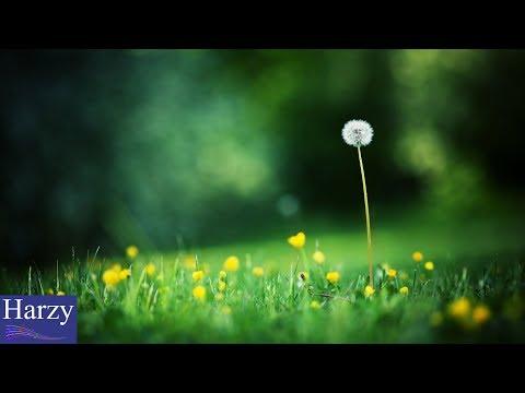J.Fla - Fine On The Outside (Priscilla Ahn) (추억의 마니 - When Marnie Was There) [1 Hour Version]